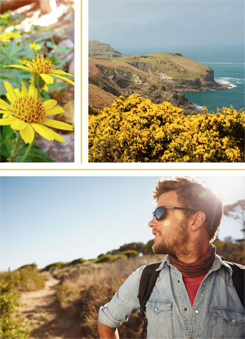 Flowers. Beach shoreline. A hiker on a trail gazing out in the distance.